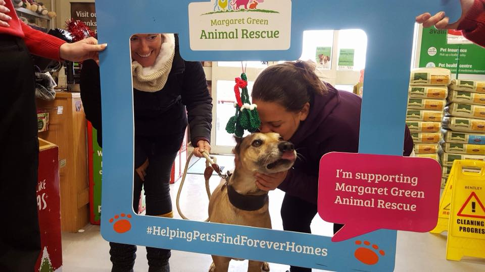 Bournemouth Pets At Home (4)