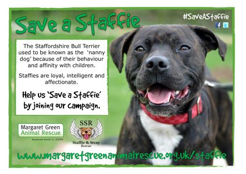 Save a Staffie poster
